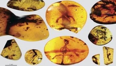 Ditemukan Fosil Kadal Berusia 99 Juta Tahun