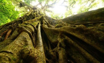 Ingin Tahu Habitat dari Spesies yang Terancam Punah, Lihatlah Awan