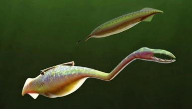 Tully Monster, Hewan Vertebrata yang Hidup pada Periode 300 Juta Tahun Lalu